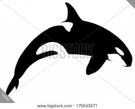 black and white linear draw killer whale illustration