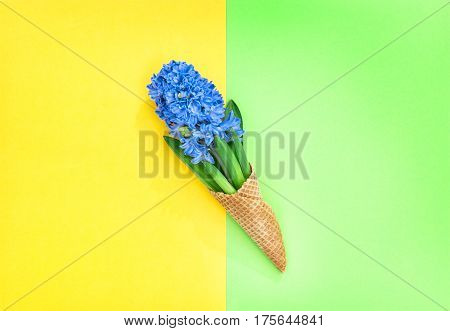 Hyacinth flowers in ice cream waffle coneon colorful background. Minimal flat lay