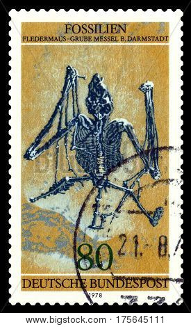 STAVROPOL RUSSIA - March 09 2017: A stamp printed in Germany shows Skeleton bat fossil circa 1978