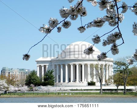 The Cherry Blossoms branch and Tomas Jefferson Memorial in Washington DC USA