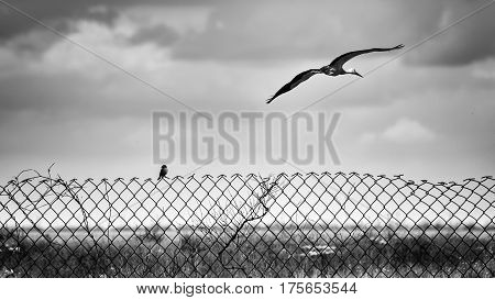 Bird on a fence of steel mesh and flying stork. Collage - allegory.