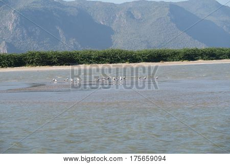 birds sitting on a sandbank at the khao-sam-roi-yot national Park