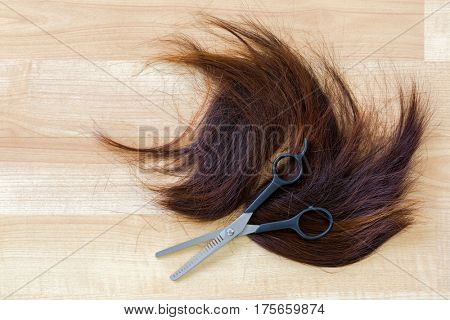 Pair of shears, thinning Scissors on bunch of trimmed cut off reddish brown hair on wooden floor at hairdressing salon, with copyspace