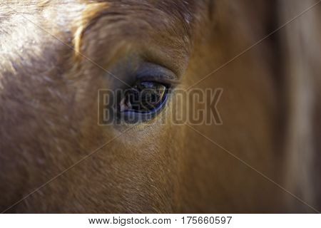This close up of a horse eye reveals a reflection of the horse's own view (including its own shadow and unsurprisingly a photographer)! Animal vision.