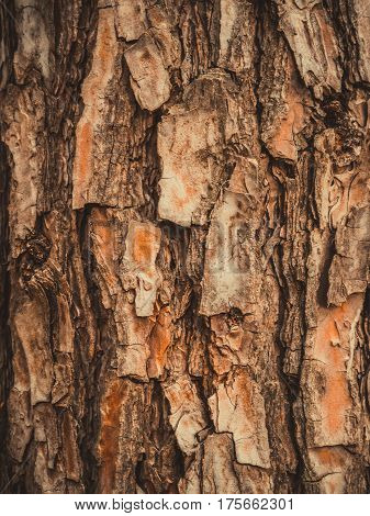 close up photo of Tree bark texture