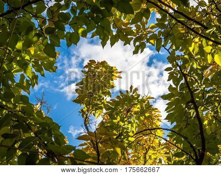 close up photo of tree branches and blue sky