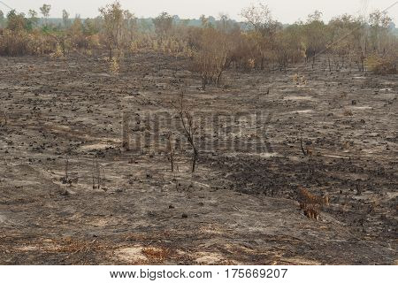 Cutting down trees and burning land for agriculture in Thailand / Deforestation