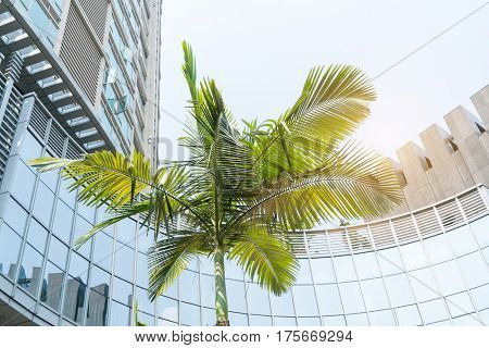 Highrise buildings on a blue sky with palm tree