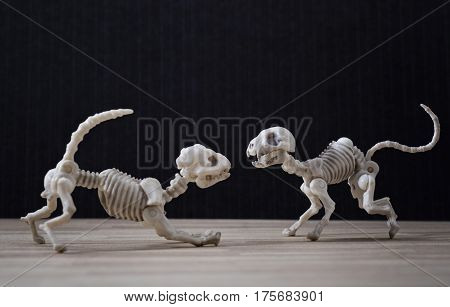 A Skeleton dog and a skeleton cat