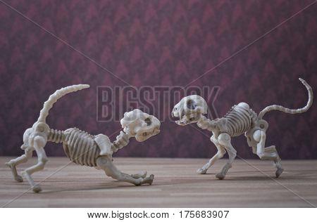 A Skeleton dog and a skeleton cat