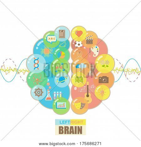 Functions of left and right brain hemispheres in groups of colorful bubbles with brain waves concept on white background