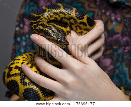 Snake anaconda in woman's hands on colour background