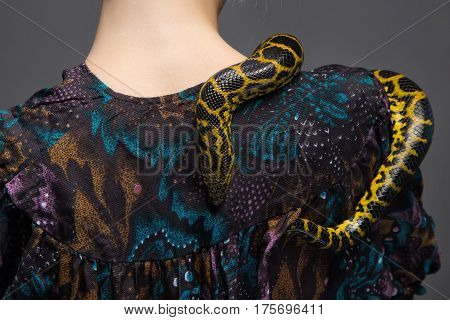 Snake crawling on woman's shoulder on gray background