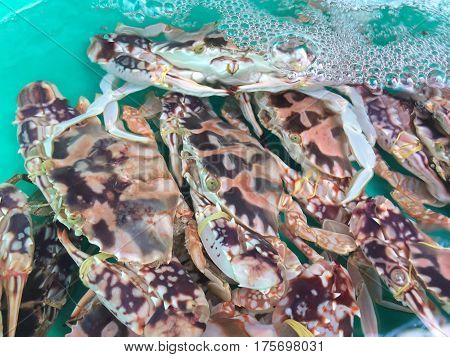 Crabs live float in street market water tank.  Abstract crab shell patterns with water bubbles.  Image suitable as background or copy space.  Close up.  Horizontal image.  Photography.