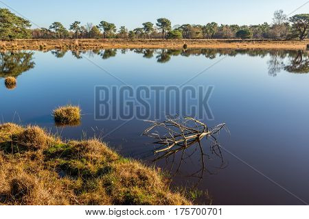 Dead branch reflected perfectly in the mirror-smooth water of a fen on a sunny day in the Dutch fall season.