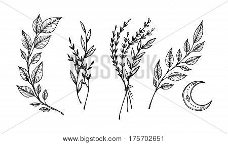 Hand sketched vector vintage elements ( laurels frames leaves flowers swirls feathers). Wild and free. Perfect for invitations greeting cards quotes blogs posters.