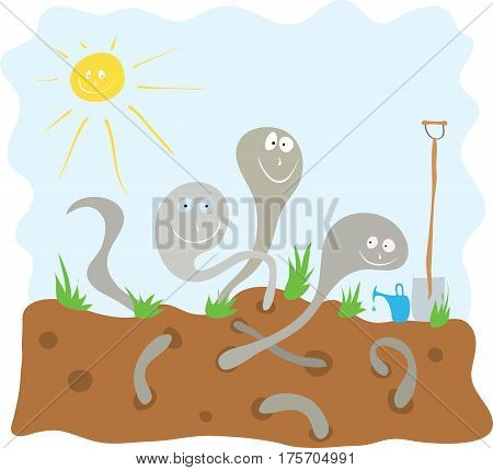 Cheerful earthworms loosen the soil in the garden / preparation of biohumus for seedlings