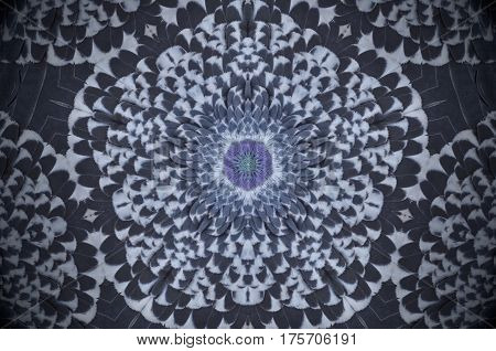 Abstract Pigeon Feathers Mandala