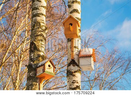 Birdhouses on birches in a spring forest