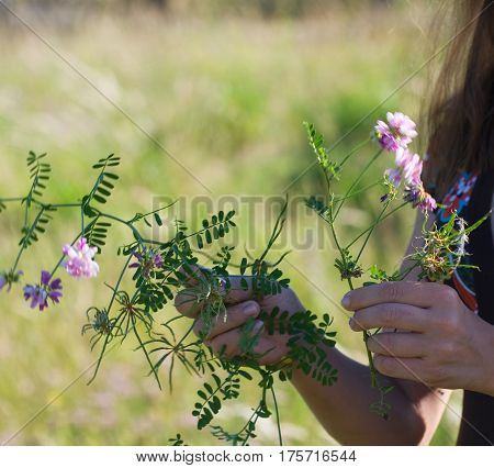 picking up a bunch of wild curly flowers
