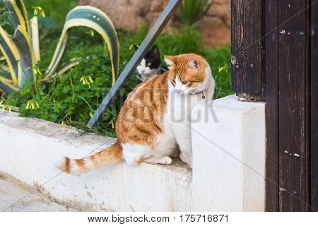 Portrait of cat with collar in the garden