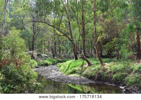 river through parklands with green shrubs and gumtrees