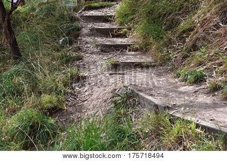 old path with steps through bush lands with shrubs and gum leaves