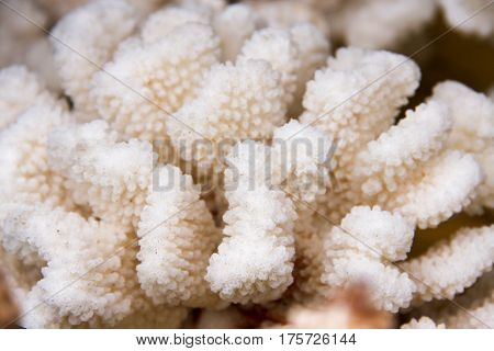 White coral close up macro as background.