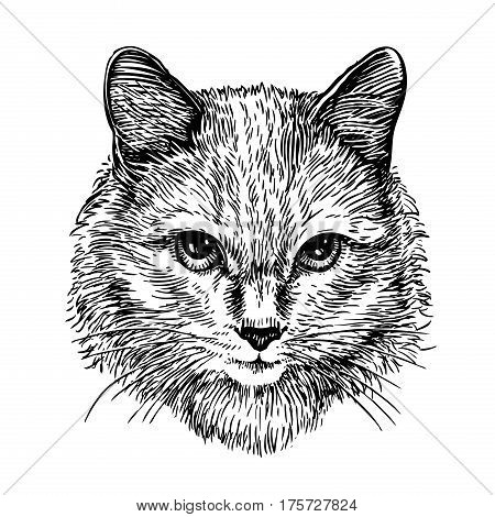 Hand drawn portrait of cute cat, sketch. Art vector illustration isolated on white background