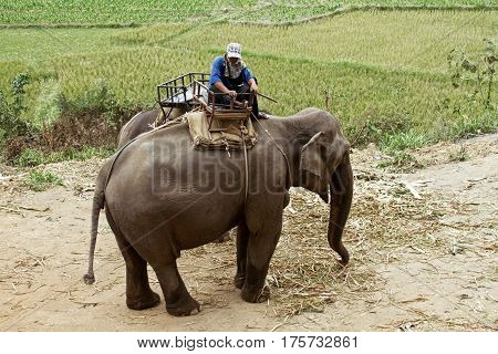 elephant ride thailand tamer background green crop