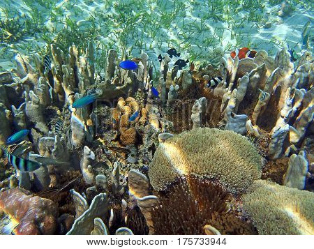 Beautiful coral reef underwater view in Indonesia