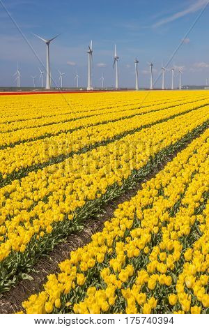 Field Of Yellow Tulips And Turbines