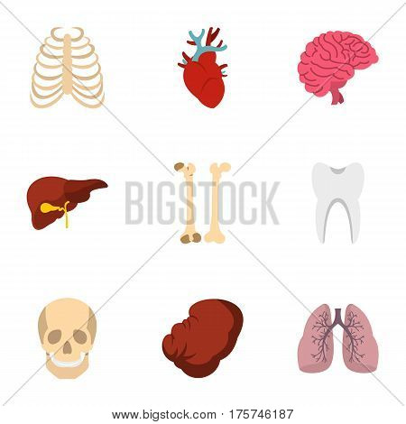 Human organs anatomy icons set. Flat illustration of 9 human organs anatomy vector icons for web