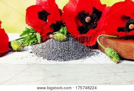 Poppy seeds and poppy flowers on a wooden white background