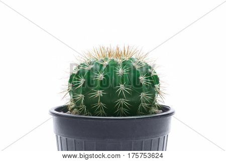 Cactus isolated on white background Leave space for the message.