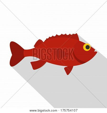 Red betta fish icon. Flat illustration of red betta fish vector icon for web isolated on white background