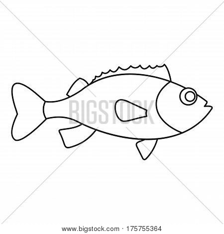 Sea bass icon. Outline illustration of sea bass vector icon for web