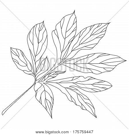 Graphical black leaves twig illustration. black leaves twig  contour leaves twig , decorative leaves twig , isolate leaves twig, monochrome leaves twig. Vector.