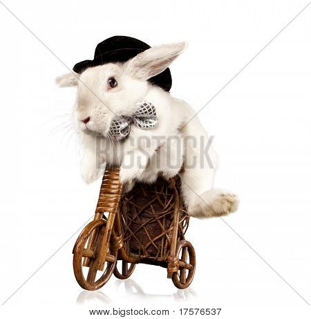 poster of Photo of cute rabbit  with top hat and bow riding bike. Isolated on dark background