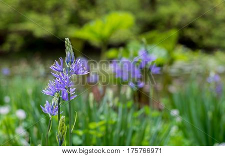 Little Purple flowers on a green field