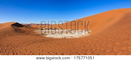 View to a dry salt and clay pan surrounded by huge red brown sand dunes. Large clay and salt pan with braided ded Acacia trees. Namib, Namibia.