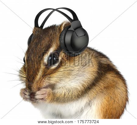 Funny animal chipmunk listening music with headphones isolated on white