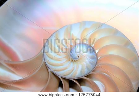 nautilus shell Fibonacci symmetry cross section spiral structure growth golden ratio