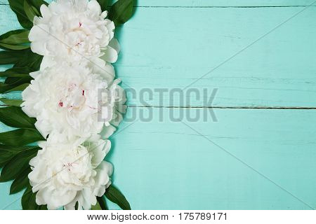 Decorative card with white peonies flowers lying on turquoise wood texture. Beautiful Horizontal background With Copy Space for invitation congratulation. Top view Flat lay
