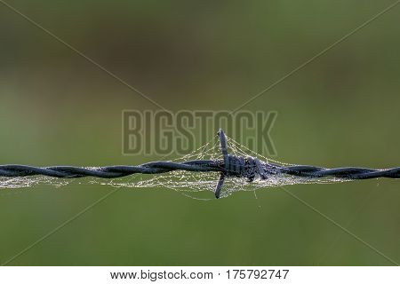 macro of sharp barbed wired with web around