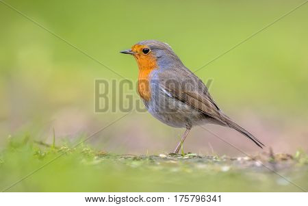 Robin Profile On Bright Green Background