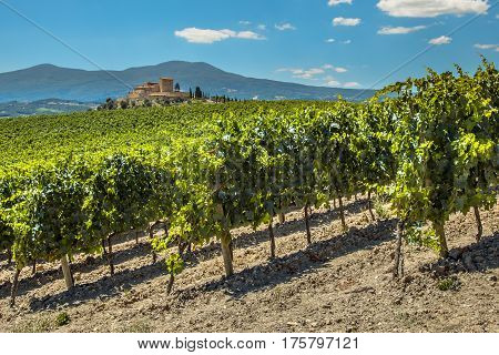 Wine Estate With Vineyards
