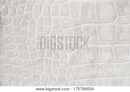 Fashion cream scales macro exotic background, embossed under the skin of a reptile, crocodile. Texture genuine leather close-up. For backdrop, substrate, composition use. With place for your text