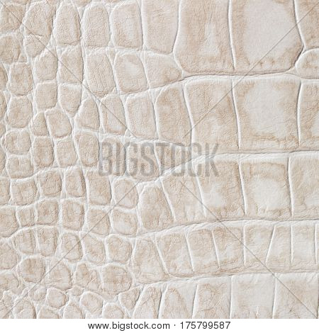 Beige skin of a reptile, crocodile. Texture genuine leather close-up, light tones, fashion trend. For backdrop, substrate, composition use. With place for your text