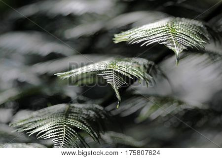 Close-up of a fern frond in Kells Bay Gardens in Cahersiveen County Kerry Ireland